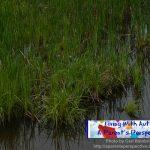 Purple Flowers On Wetlands