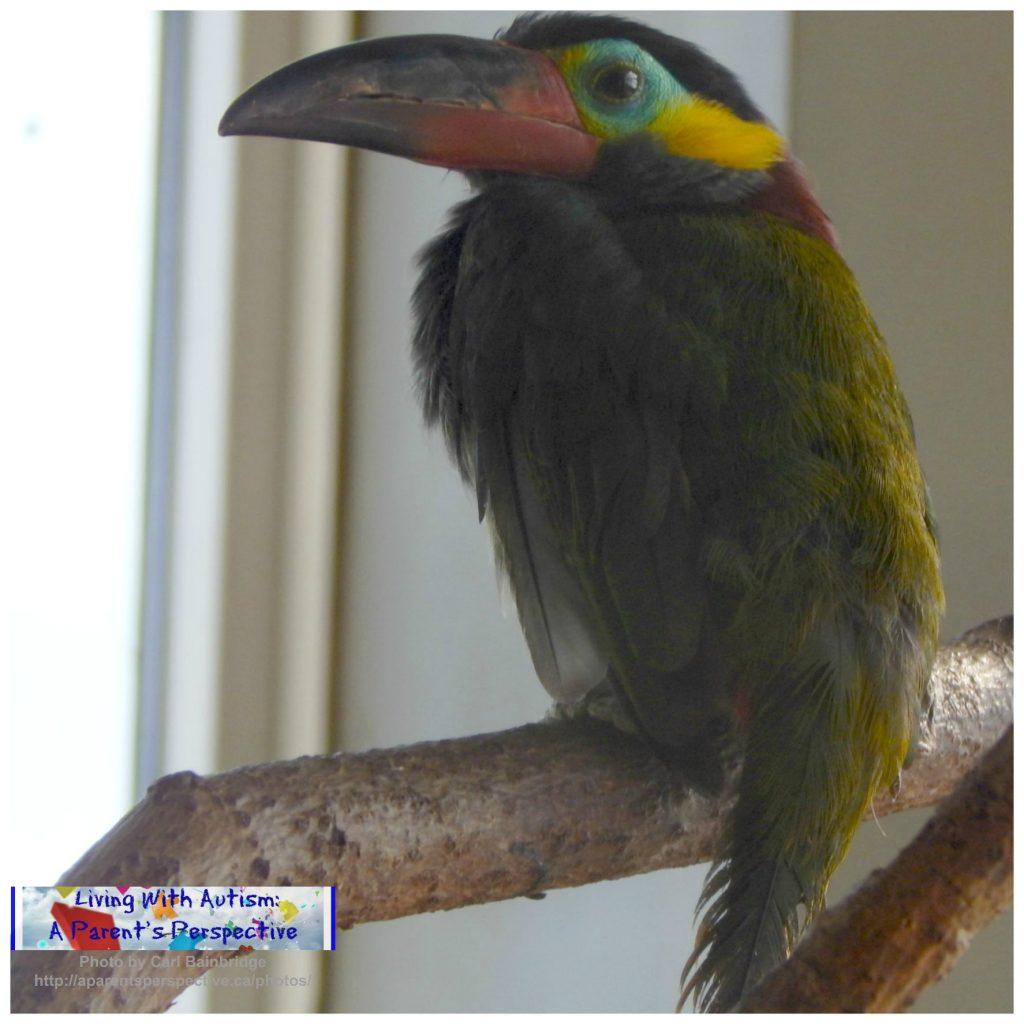 Bird Kingdom 2 a