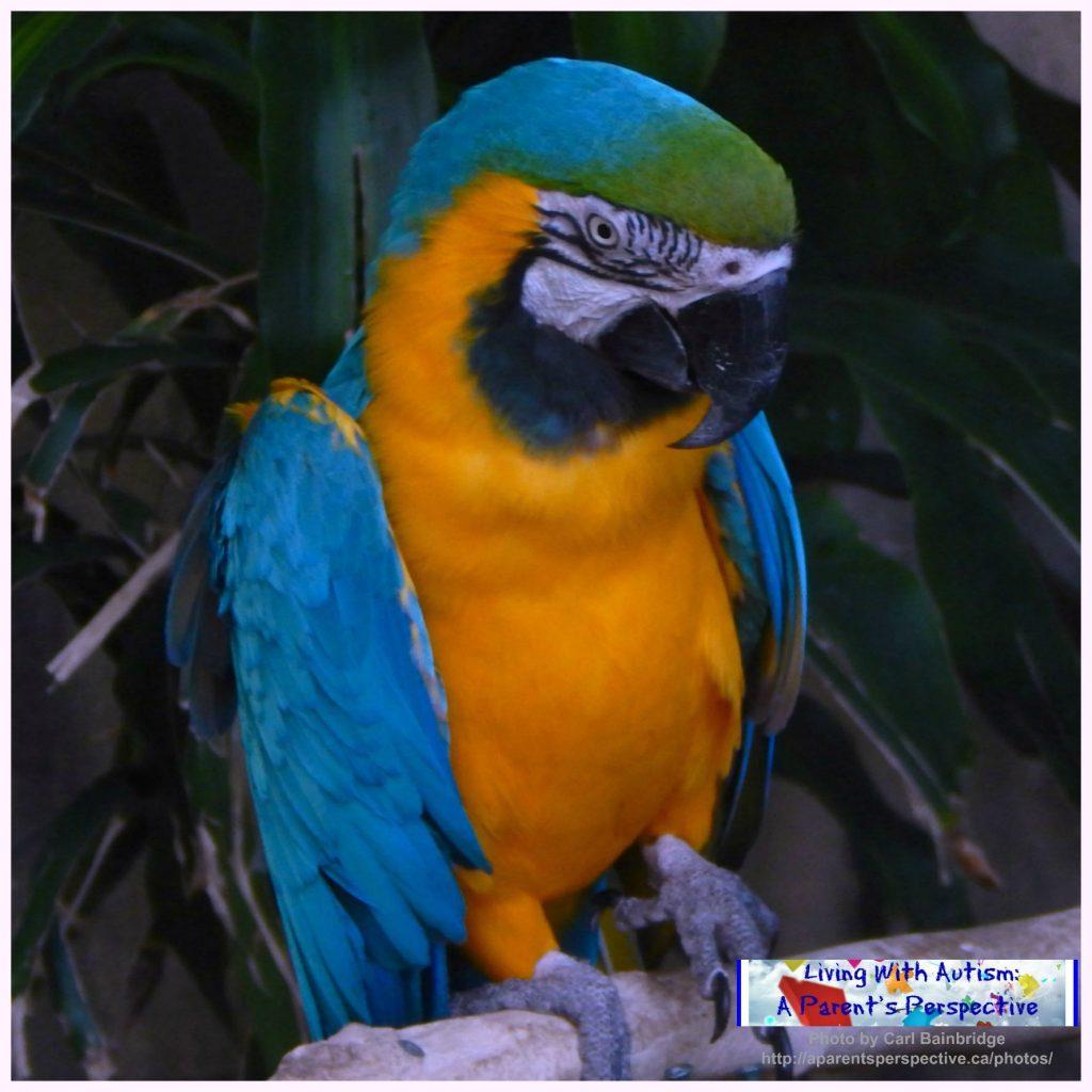 Bird Kingdom 4 a