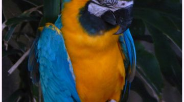 Bird Kingdom Is A Bright Colourful Way To Spend A Day #FamilyTravel