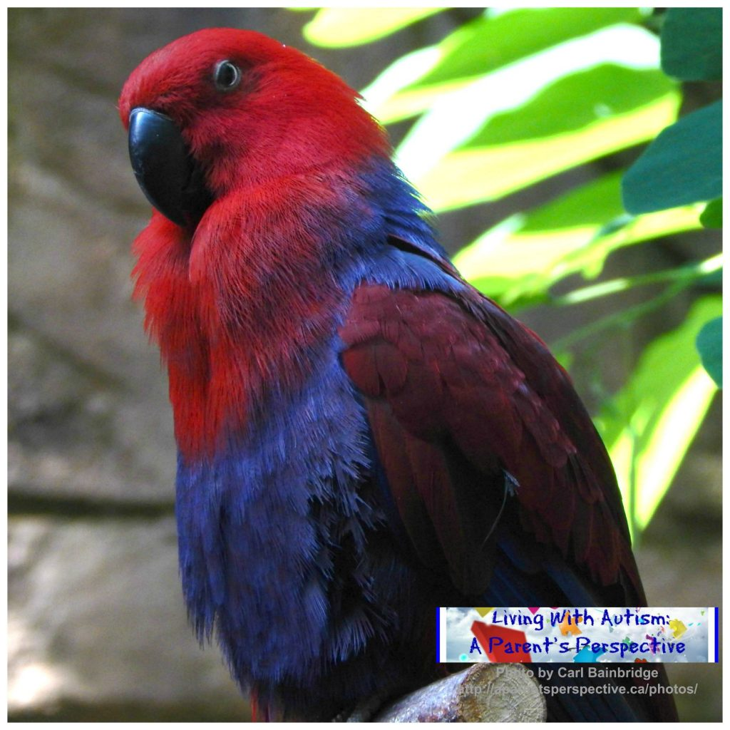 Bird Kingdom 5 a