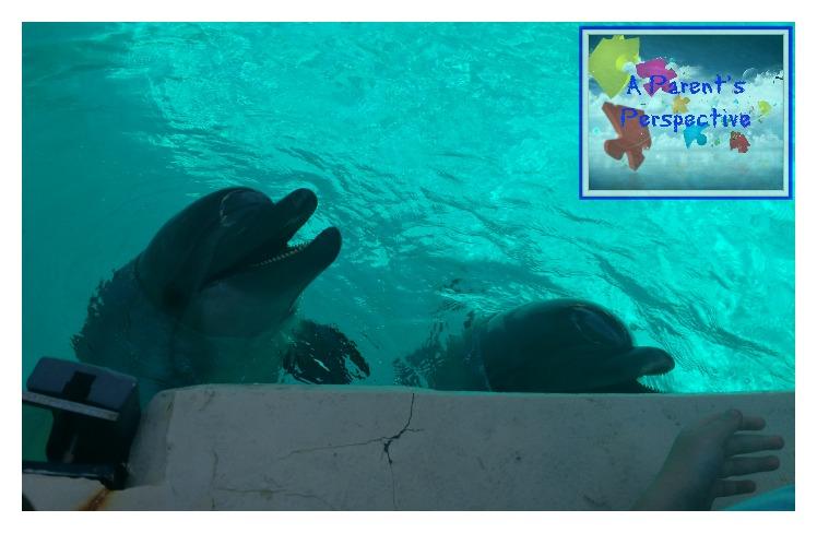 marineland-dolphins